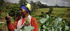 LE PORTE MONNAIE ELECTRONIQUE DES PAYSANS : UNE REVOLUTION DANS LE MONDE AGRICOLE AU TOGO