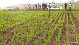 Afrique du sud : Le projet agricole uMsinga pour autonomiser les femmes